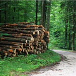 Forestry Jobs Ontairo